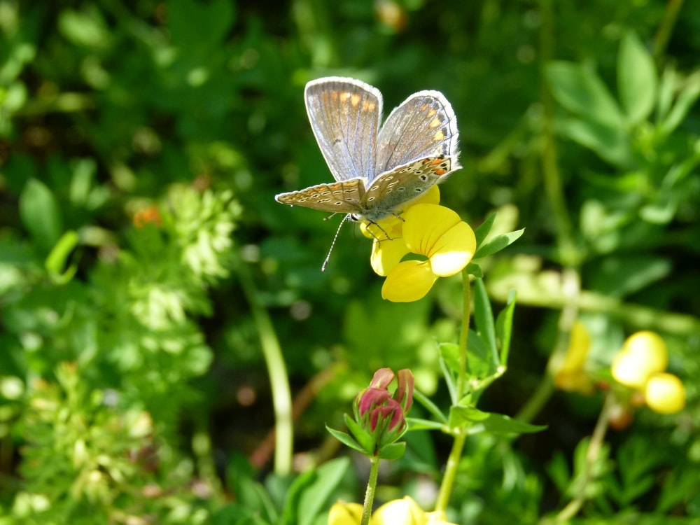 gray and brown butterfly perching on yellow flower during daytime