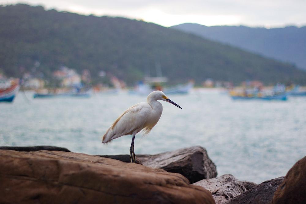 white long beaked bird on rock viewing calm sea