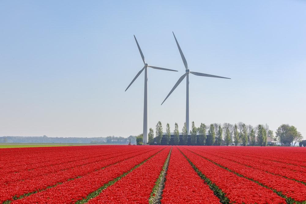 red flower field near wind turbines