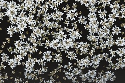 black and white floral cloth