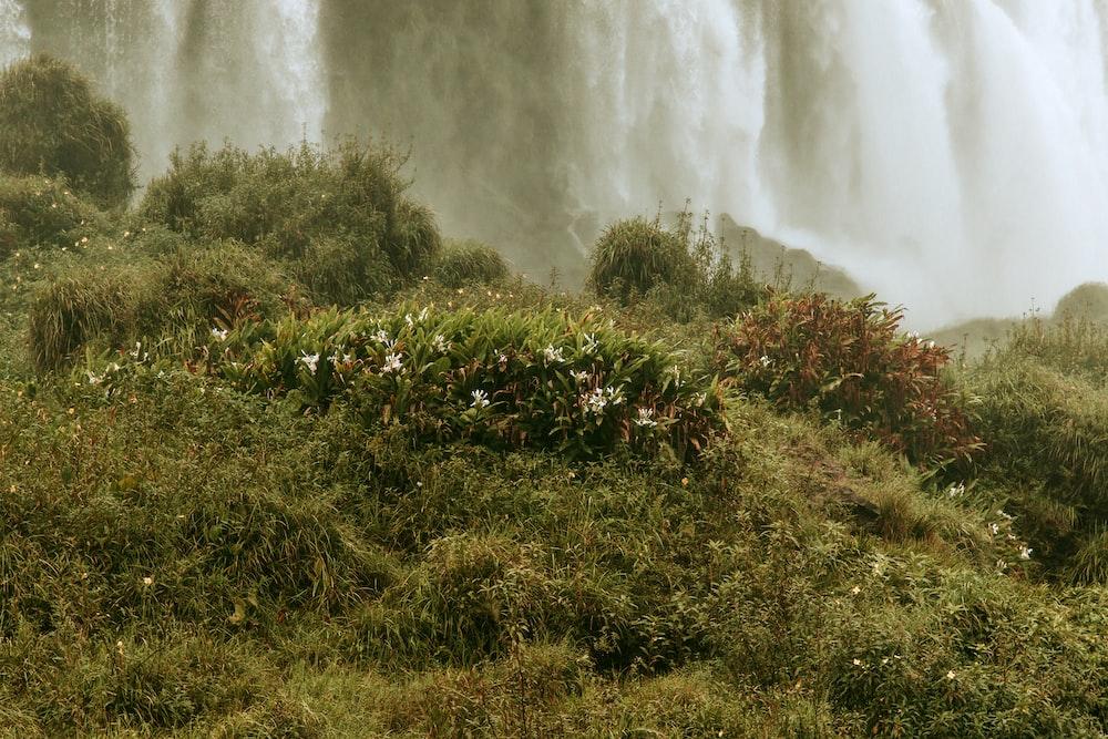 green grass field beside waterfalls