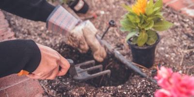 Gardening Tips How to Care for Heucherella Alba