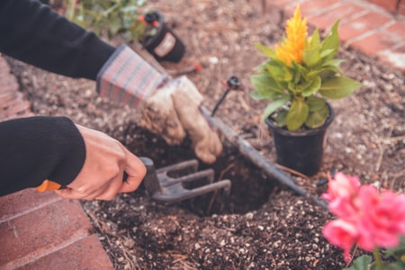 Planning and Organizing Your Garden
