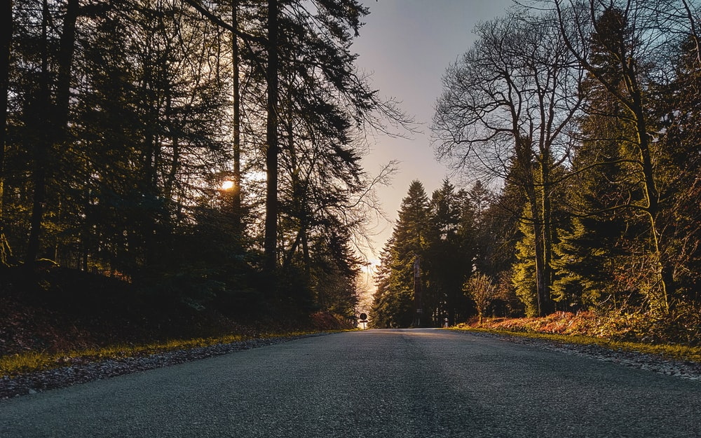 road with trees on side