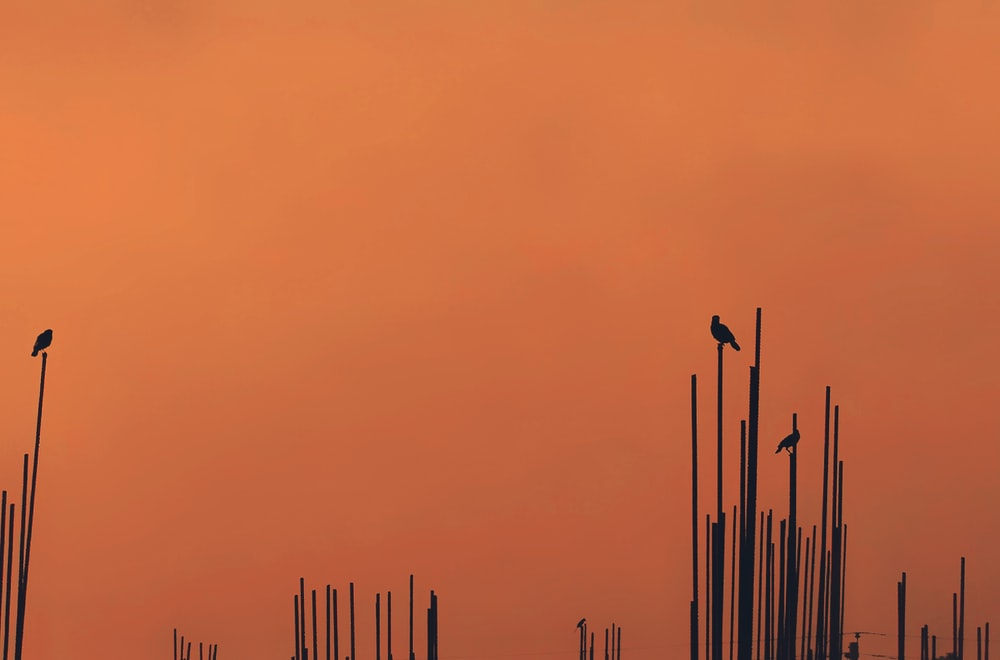 silhouette of birds on sticks during daytime