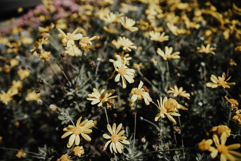 yellow petal flowers close-up photo