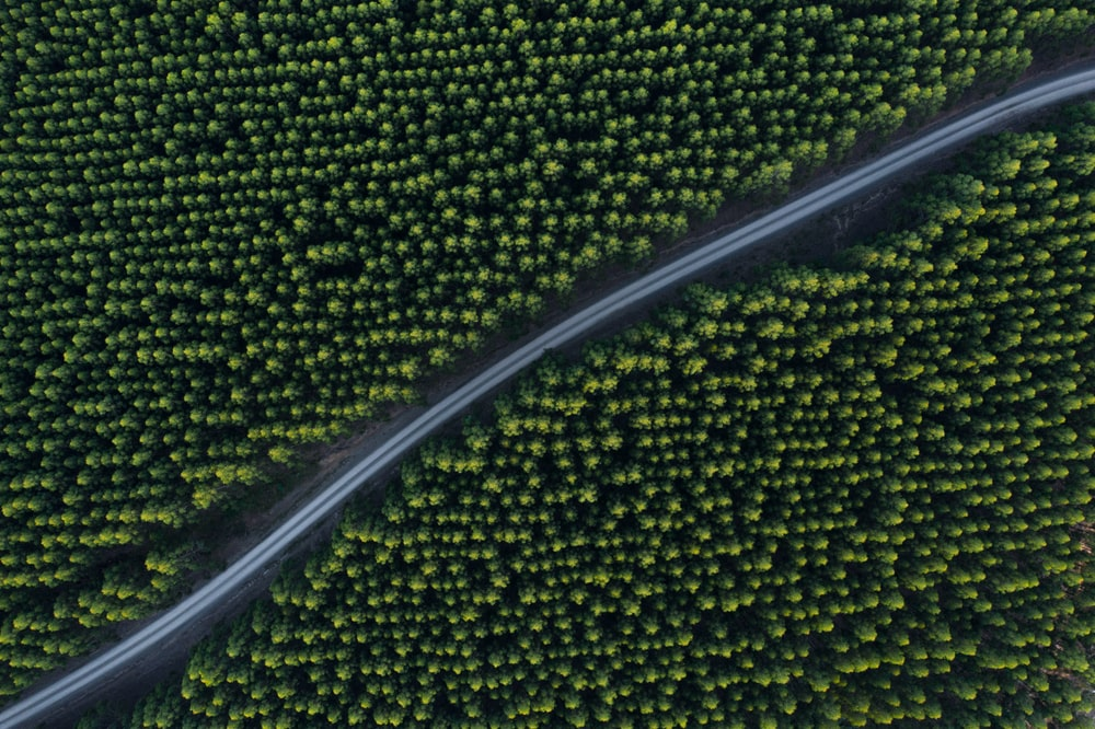 aerial photo of concrete road in between trees