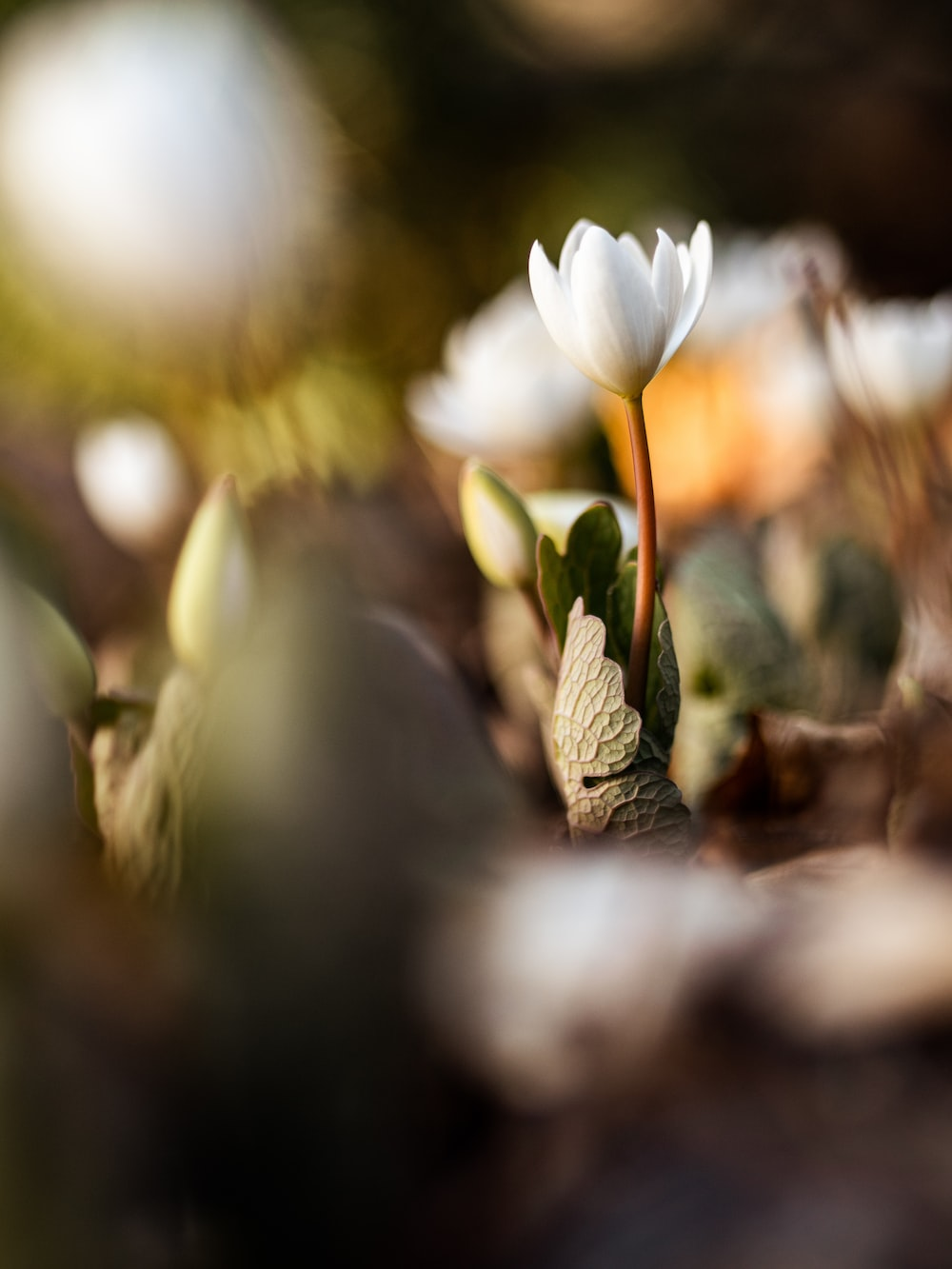 closeup photography of white-petaled flower