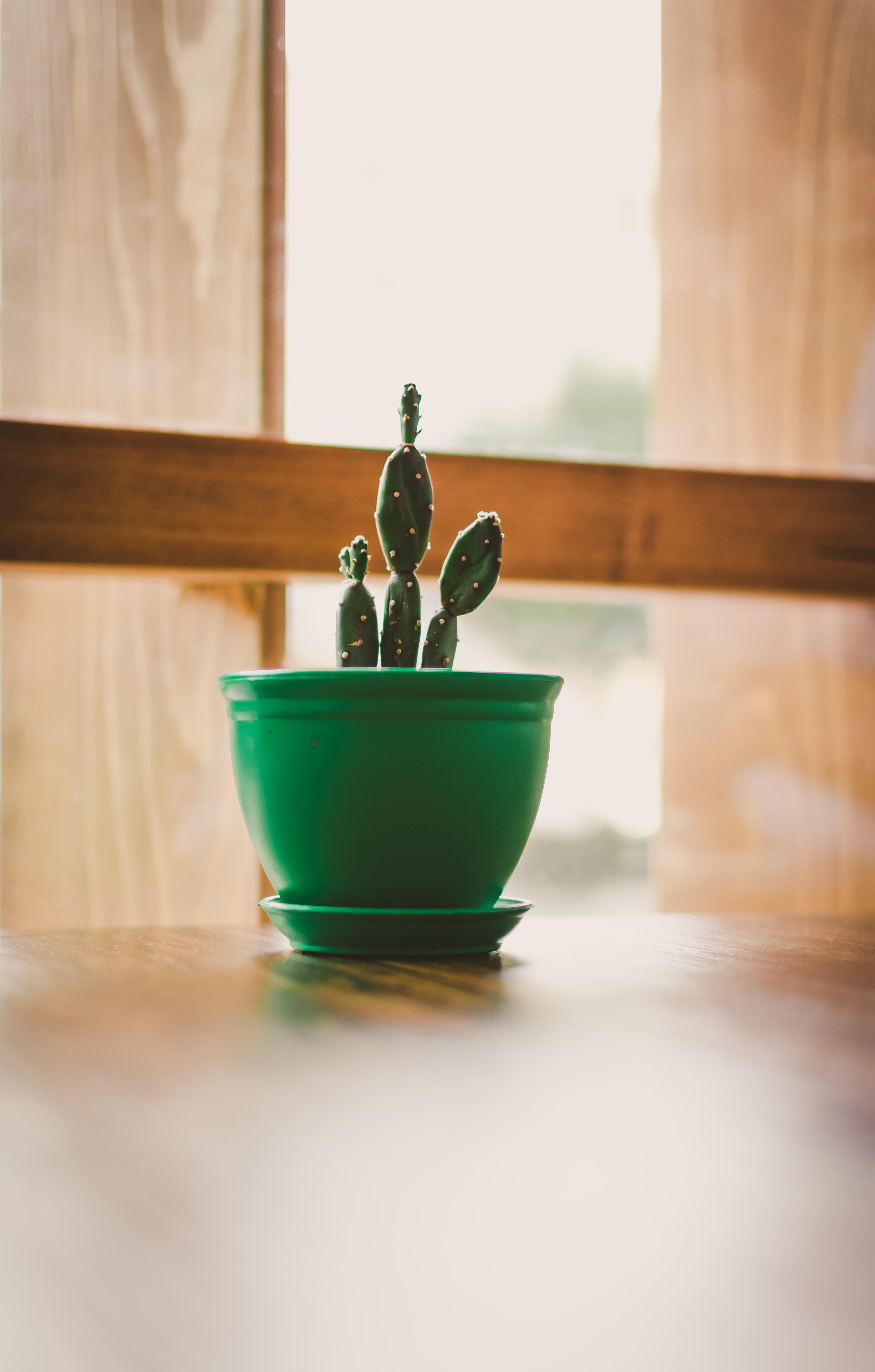green cactus in green pot