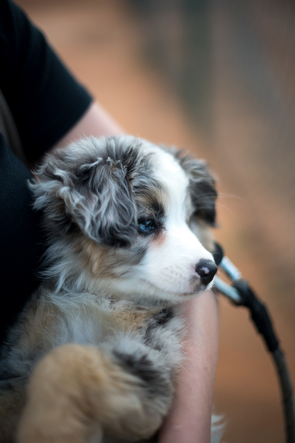short-coated white and brown puppy