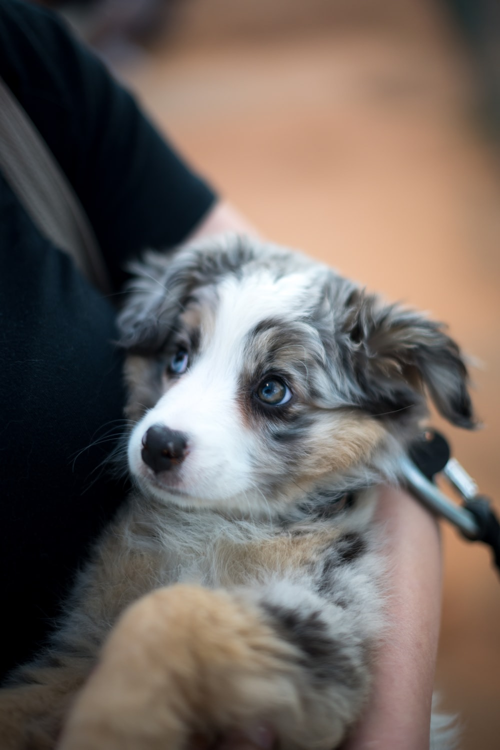 person holding puppy