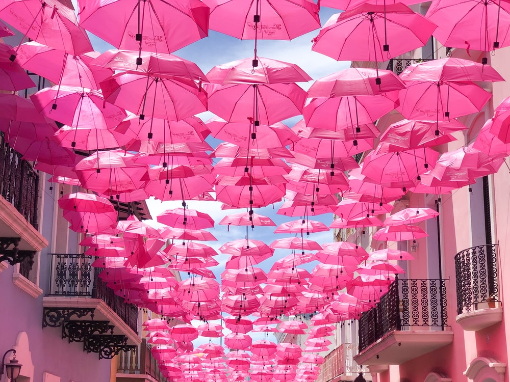hanged pink umbrellas
