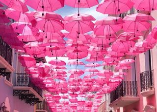 hanged pink umbrellas
