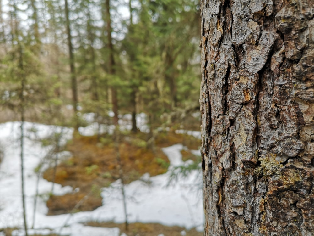 close view of tree bark at the forest