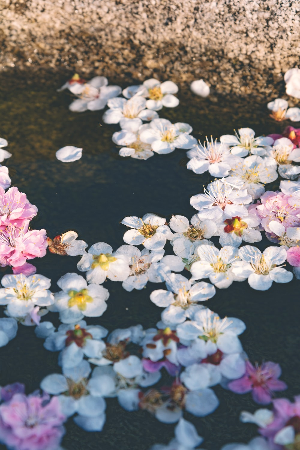 white and pink flowers in water