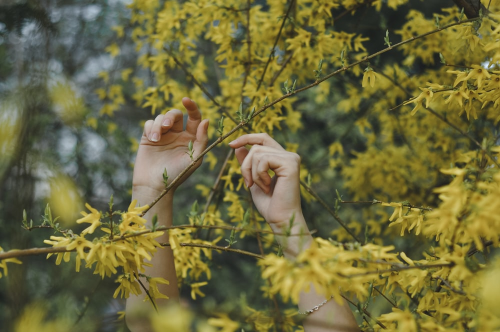 person holding leaves and stalks