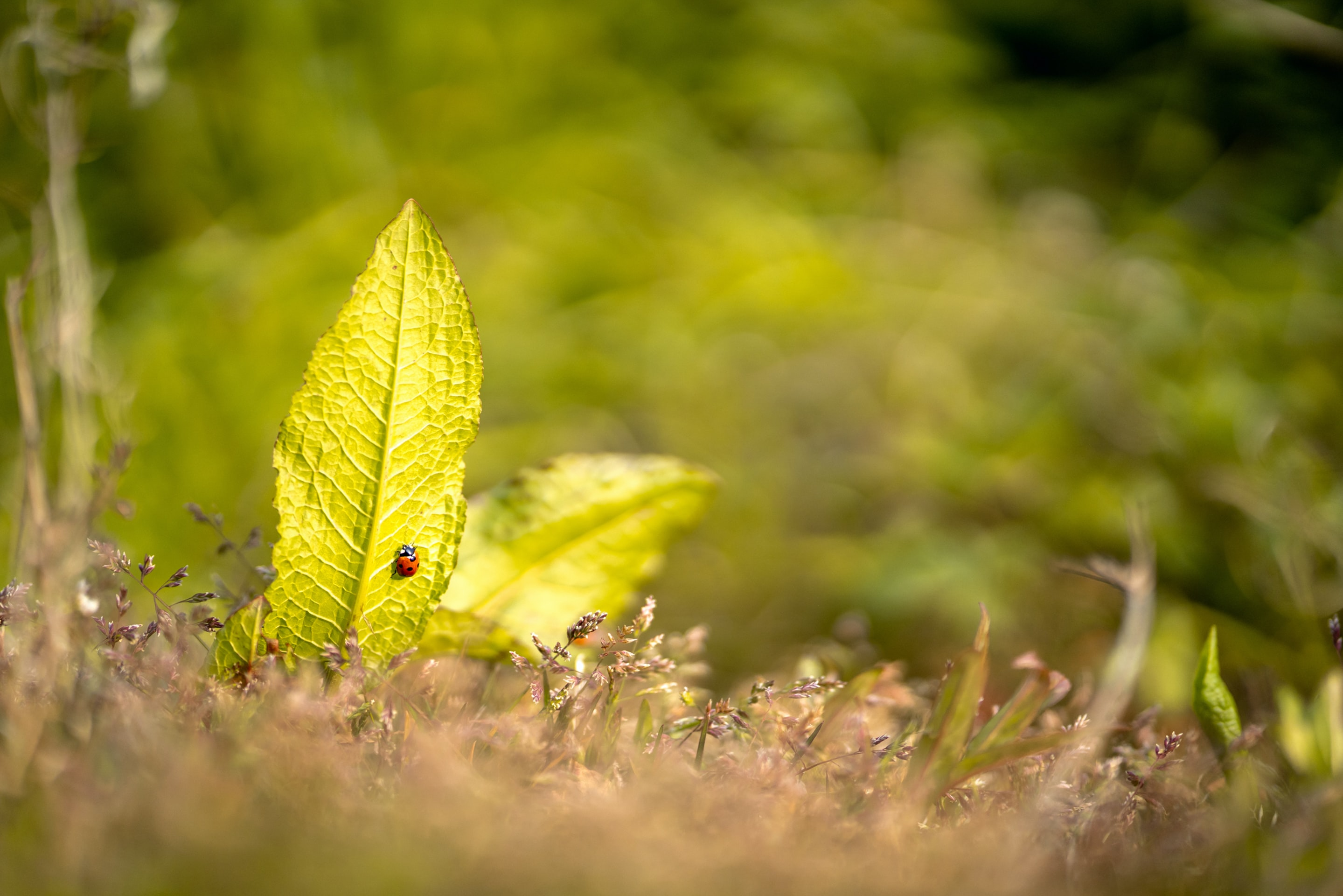 selective focus photo of ladybug perch on leaf a