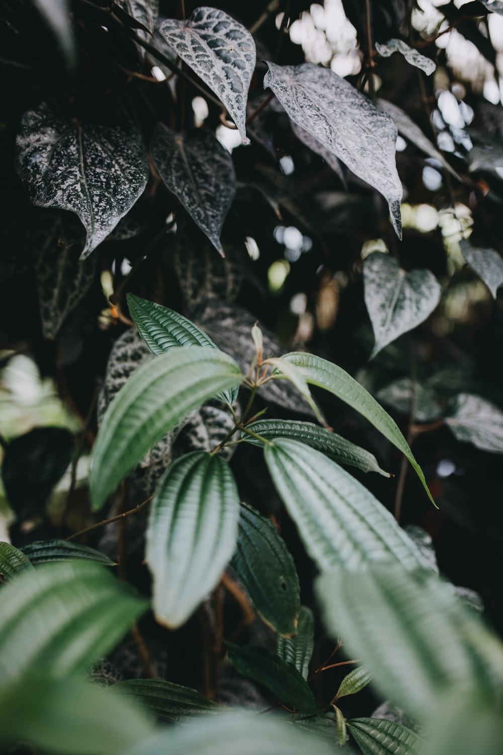 selective focus photo of green-leaf plant