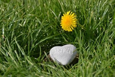 heart-shaped black stone on green grass