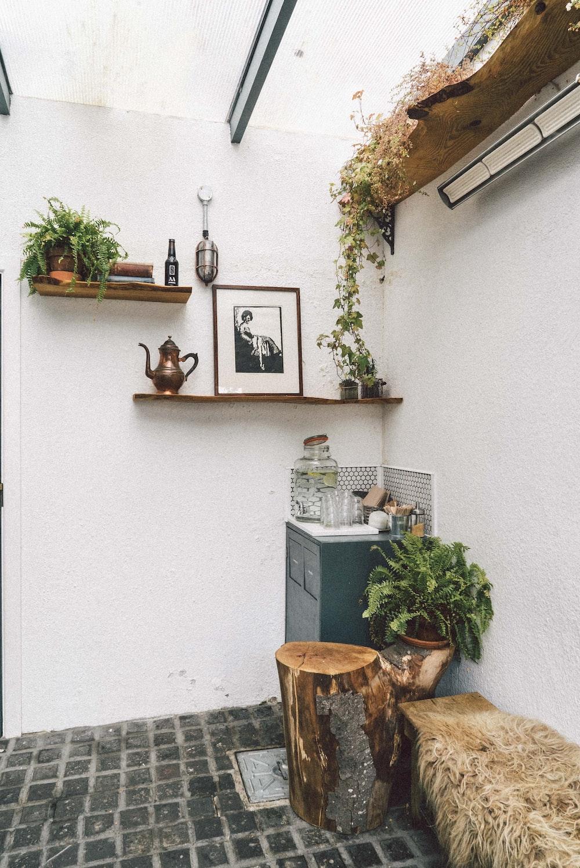 green plant beside cabinet