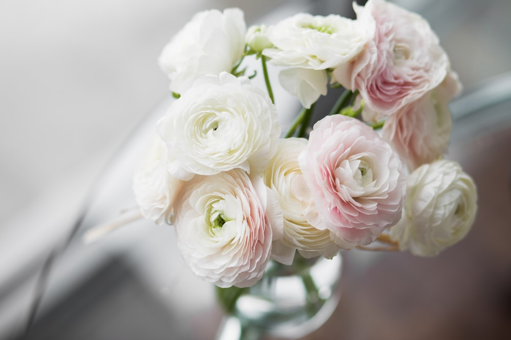 close-up photography of white petaled flowers