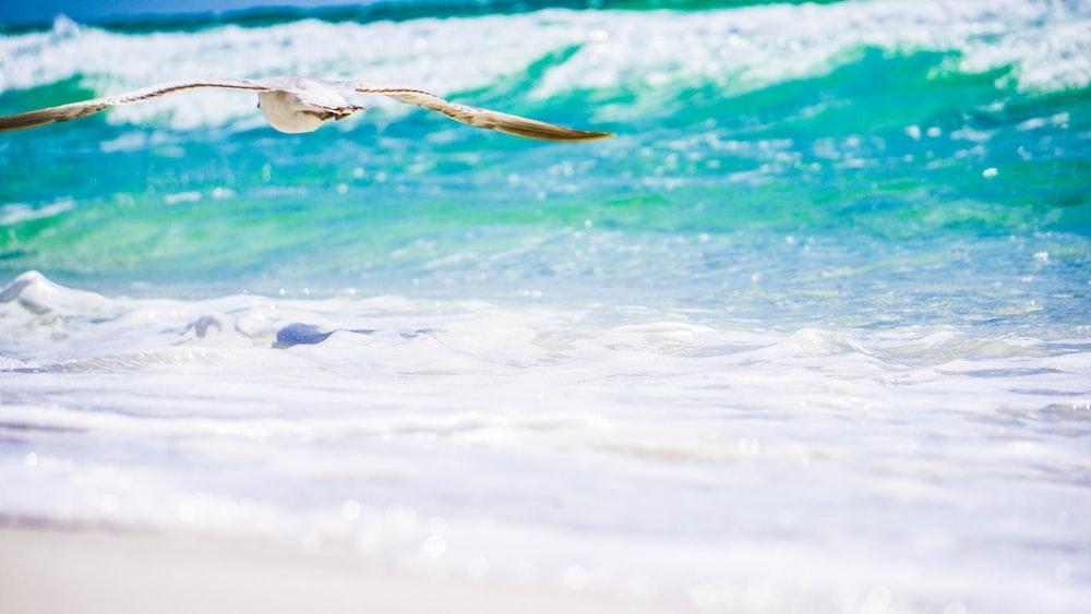 white bird flying near blue sea