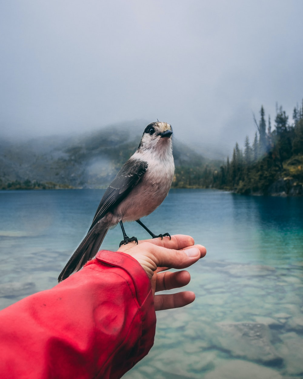 grey and black bird perching on person's left hand near lake
