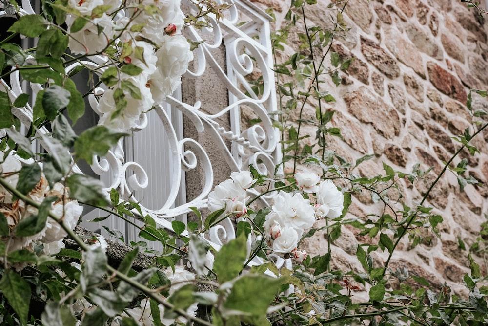 white petaled flowers on window