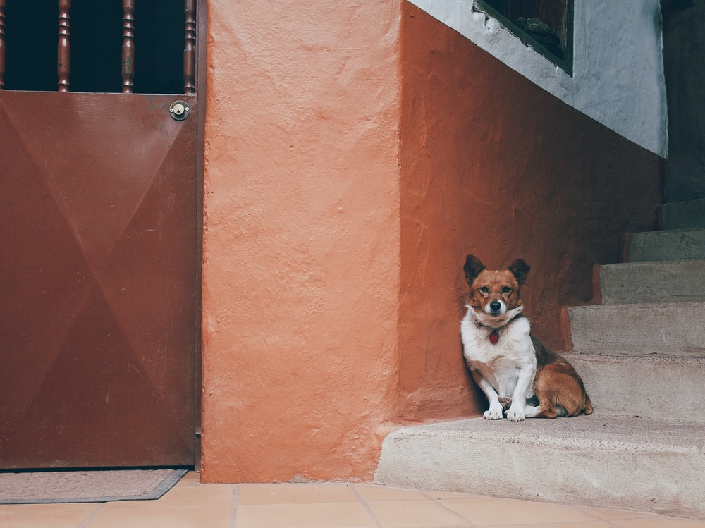 dog sitting on stairs