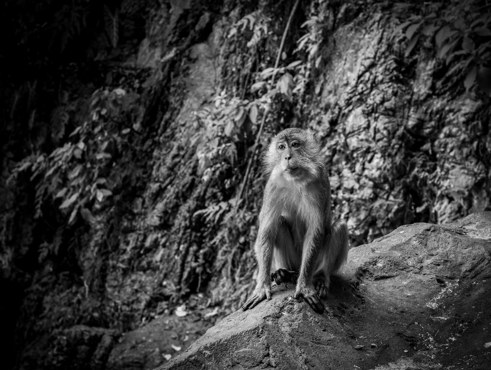 primate at the forest