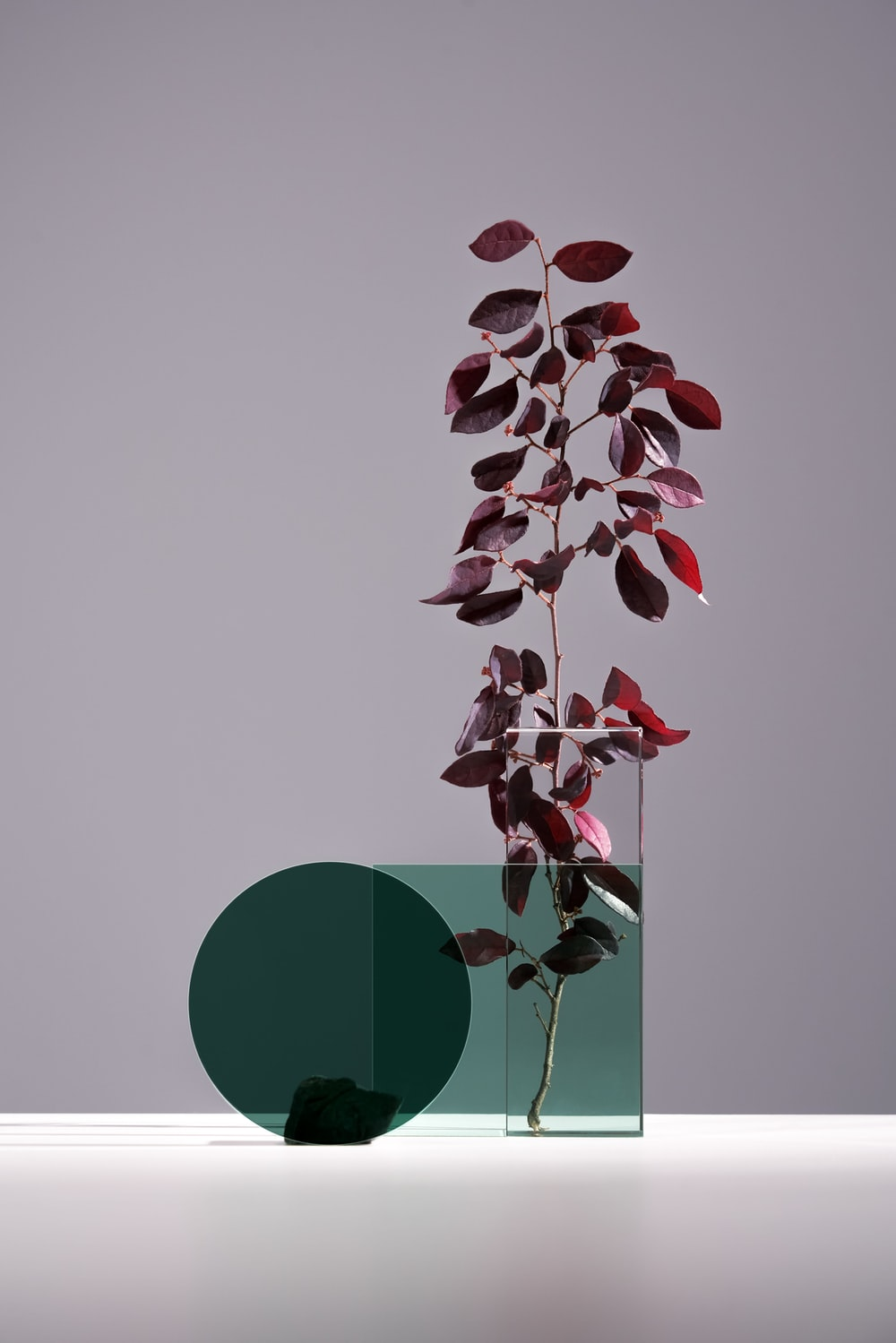 purple leaves on clear glass vase on the table