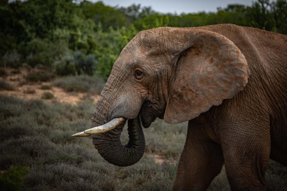 close-up of elephant near tree