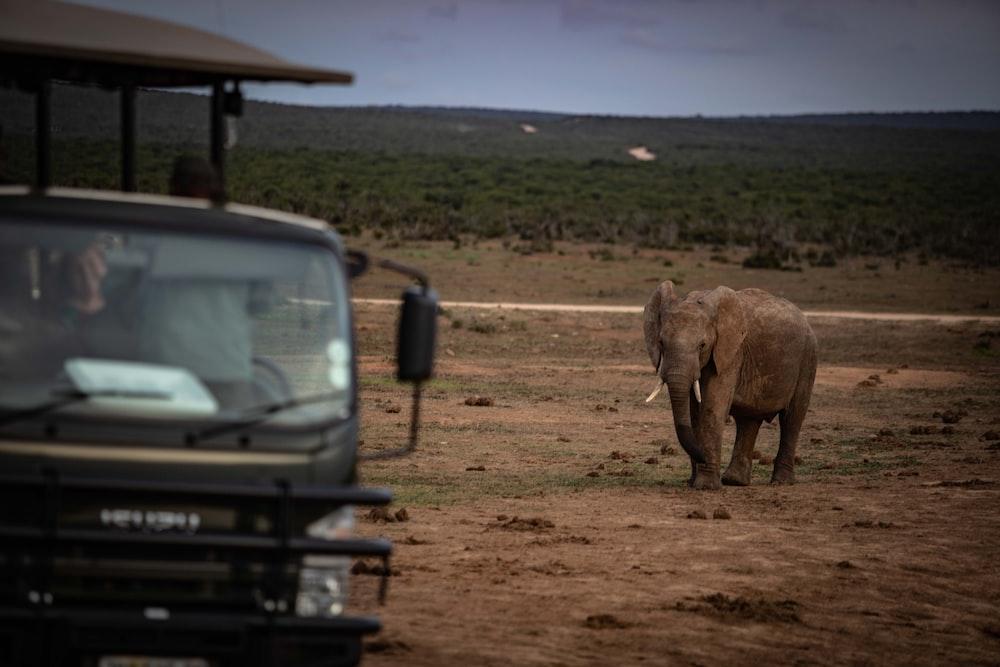 grey elephant beside black vehicle during daytime