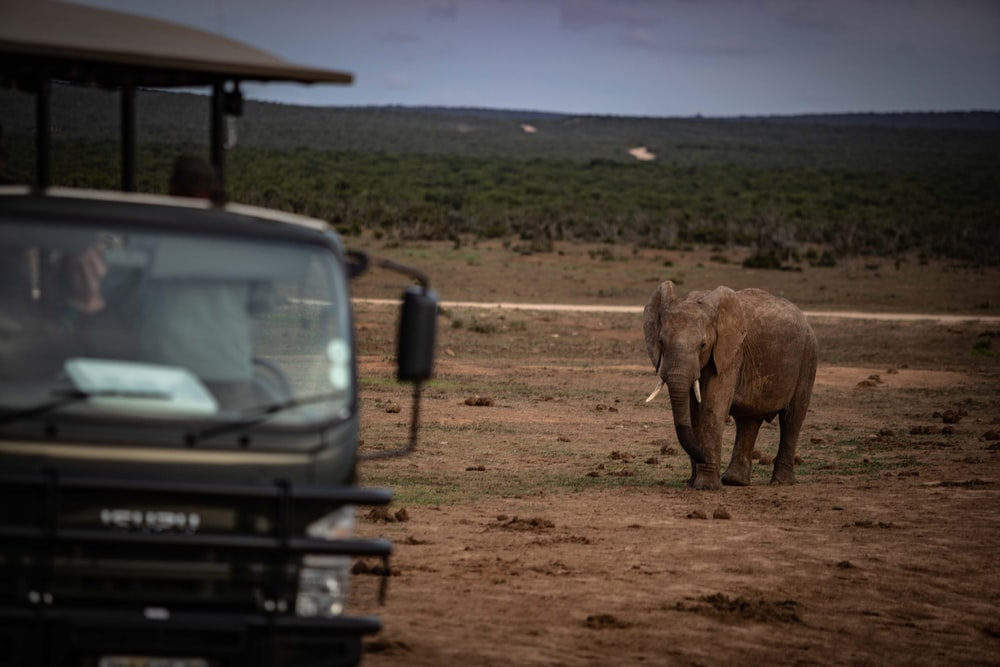 grey elephant beside black vehicle during daytime