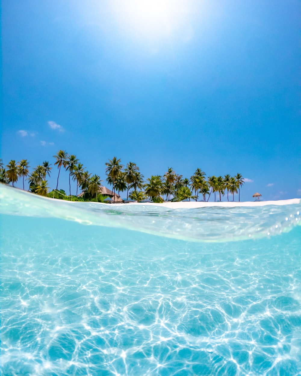 crystal clear water near coconut trees under the sun