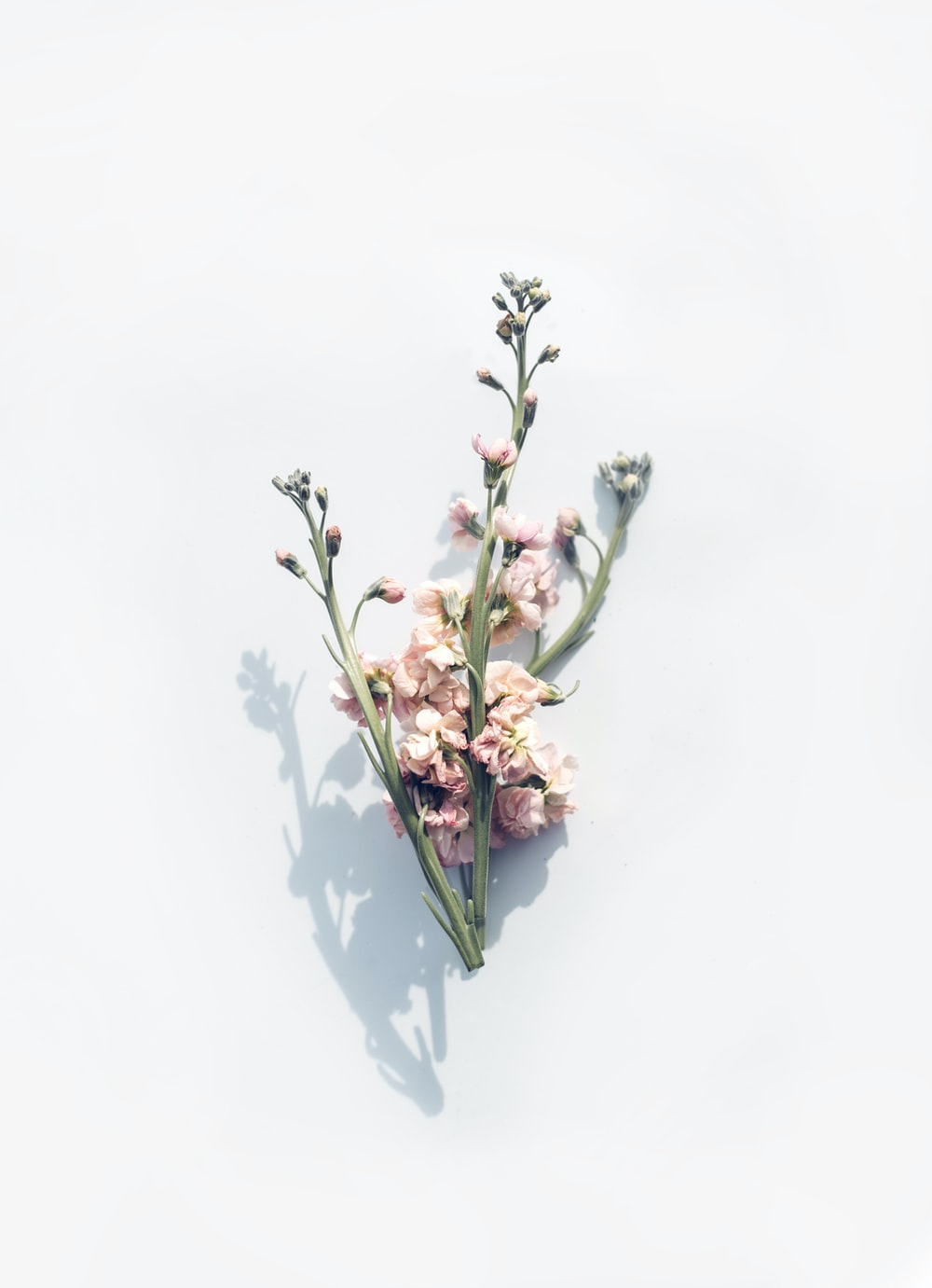 pink flower on white surface