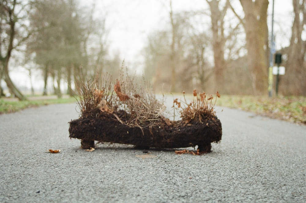 withered grasses and soil on middle of road