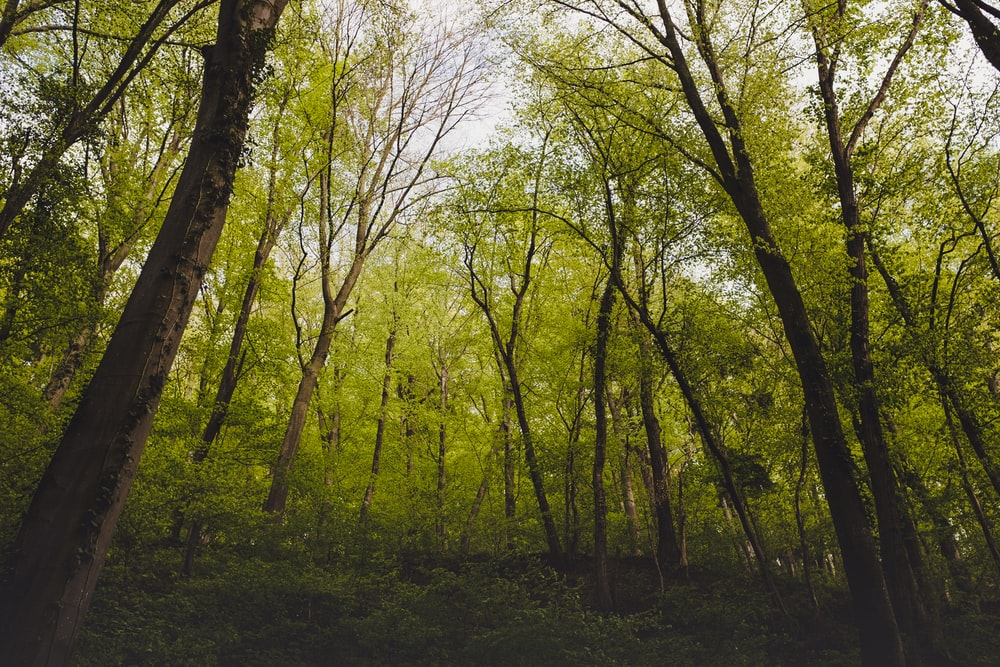 green forest landscape photo