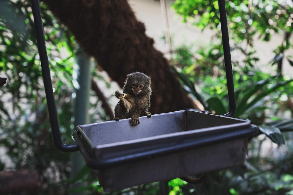 brown monkey on square gray bowl