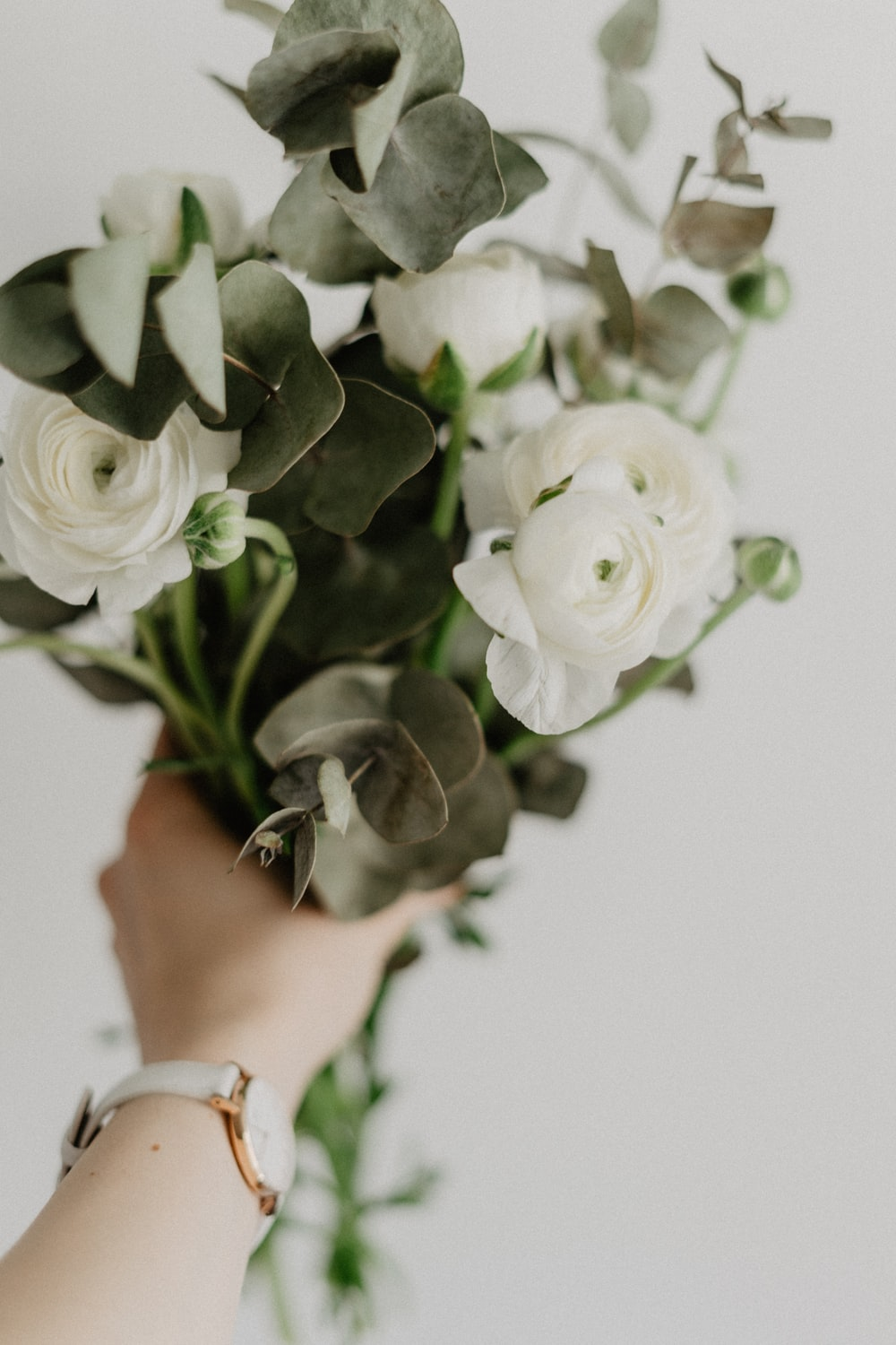 person holding white rose with green leaves