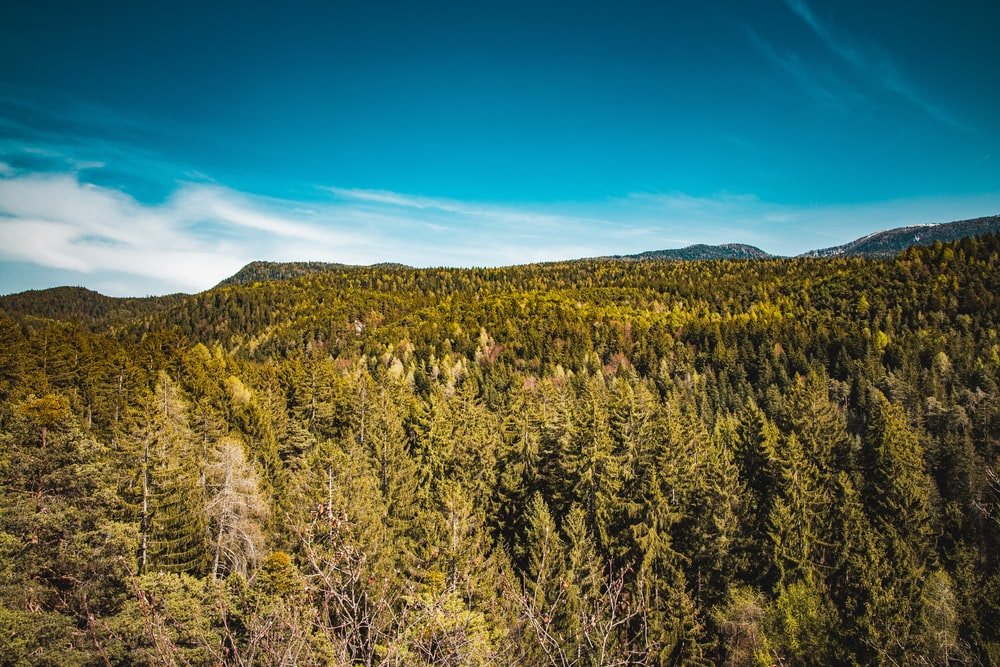 aerial photography of green trees under calm blue sky