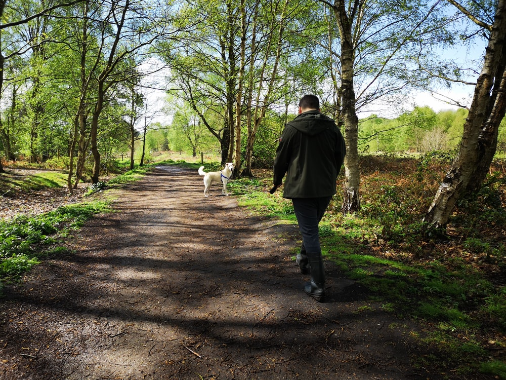 man walking on dirty road and white dog in front during daytime