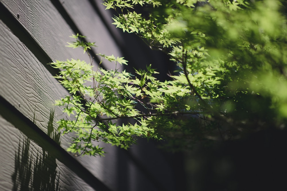 green-leafed plants beside gray fence