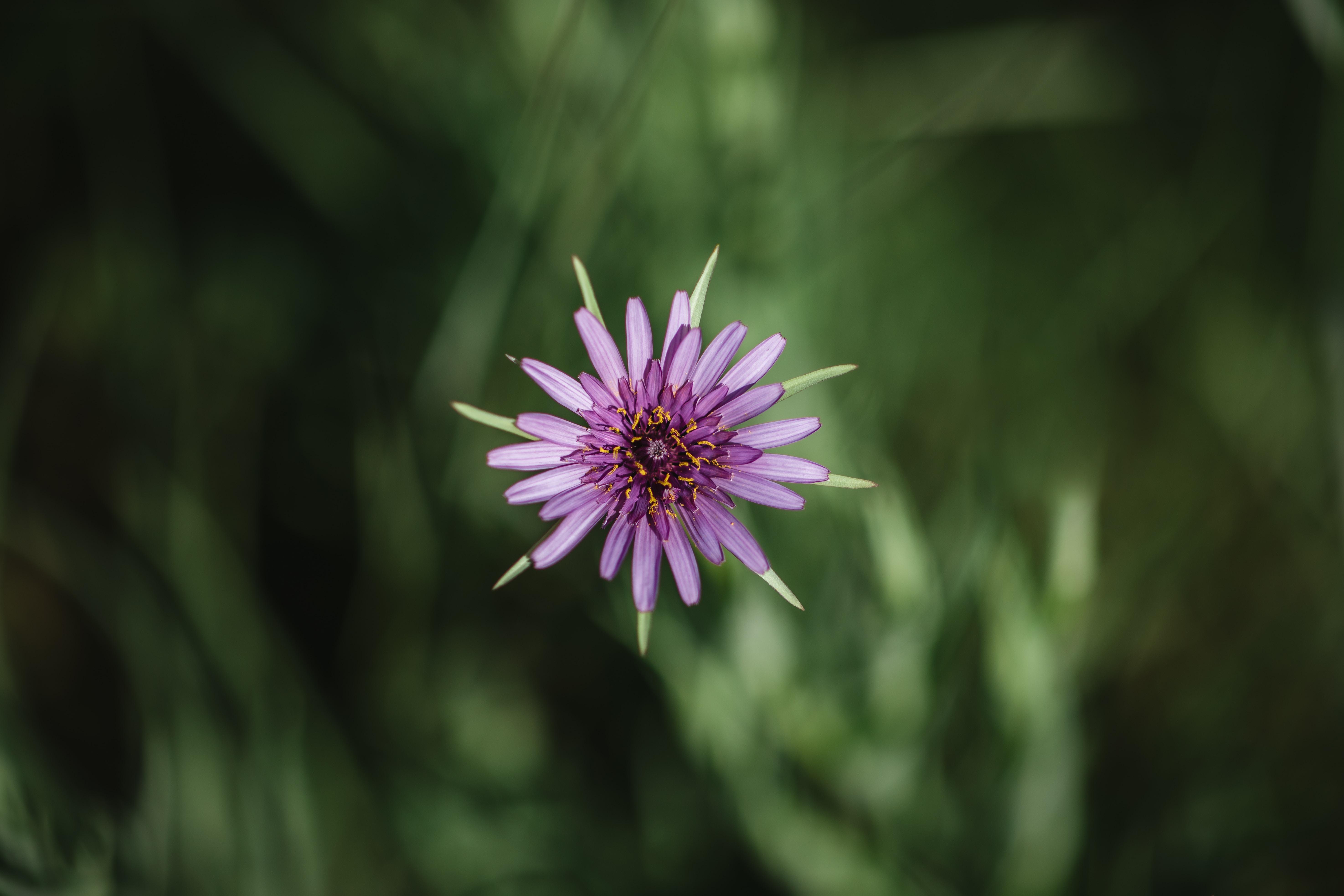 photo of purple flower
