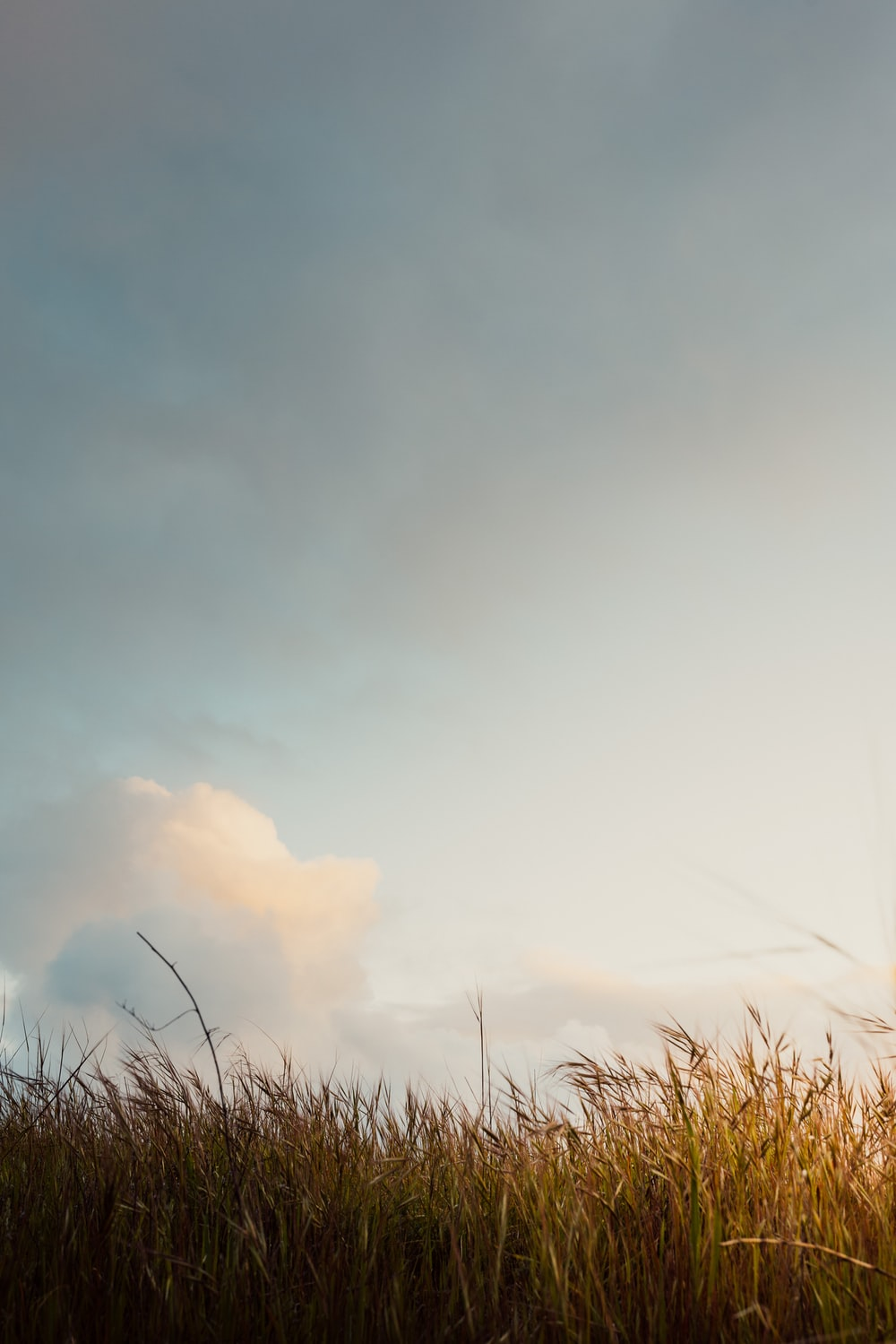 brown grass field under white cloudy sky