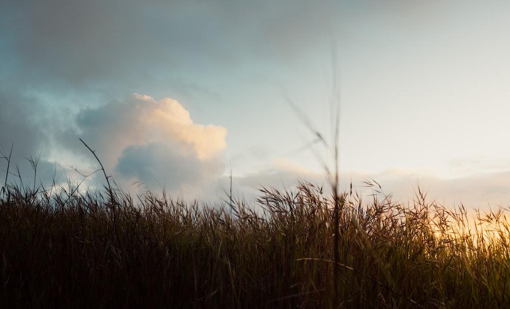 green grass across white clouds