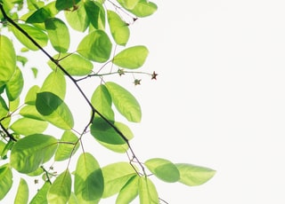 green flowering plant