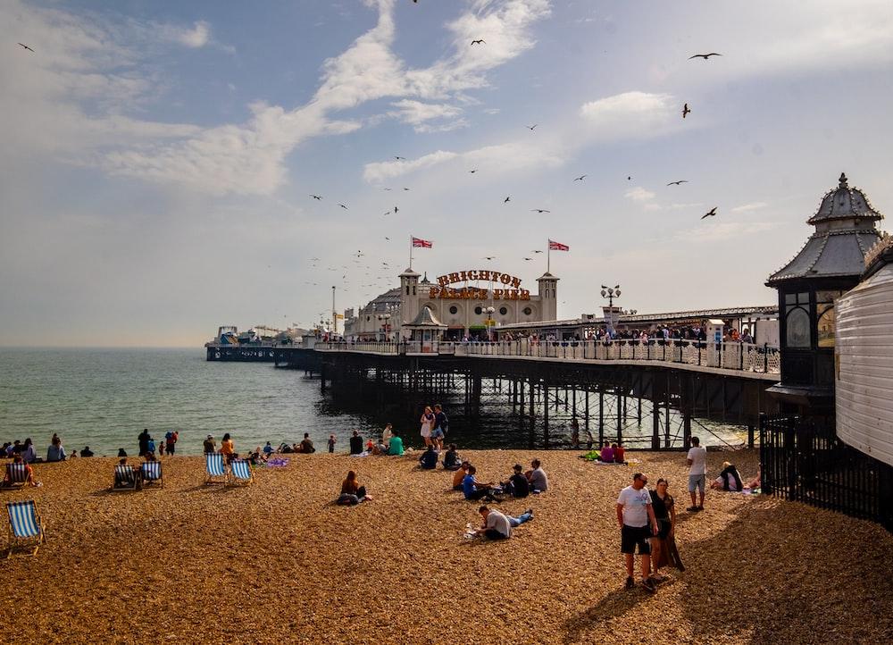people near seashore viewing sea