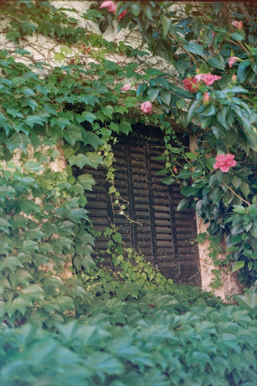 black wooden louver door window