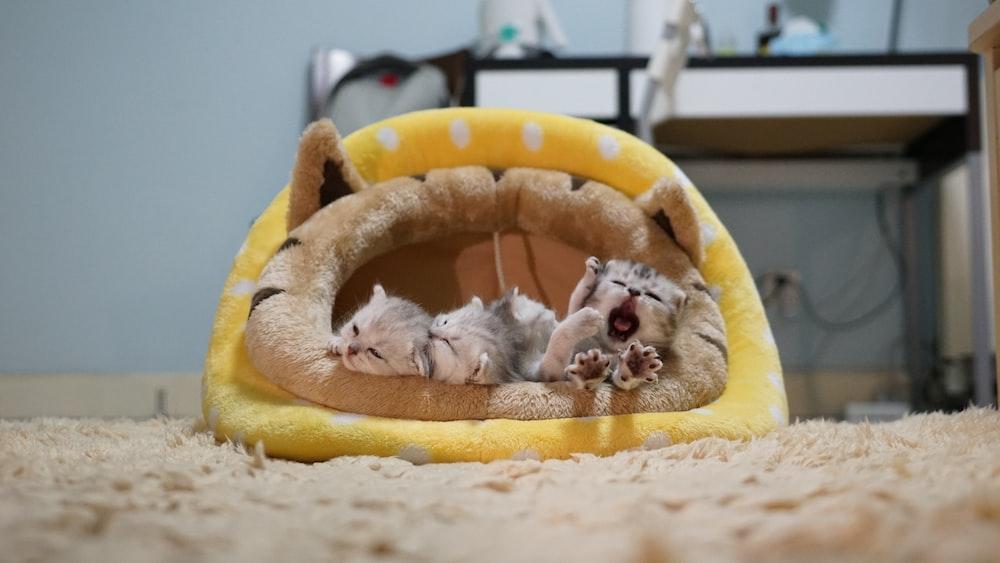 three kittens in yellow cat bed